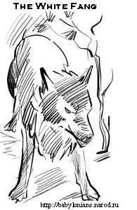 The White Fang by Jack London  - Белый клык Джека Лондона